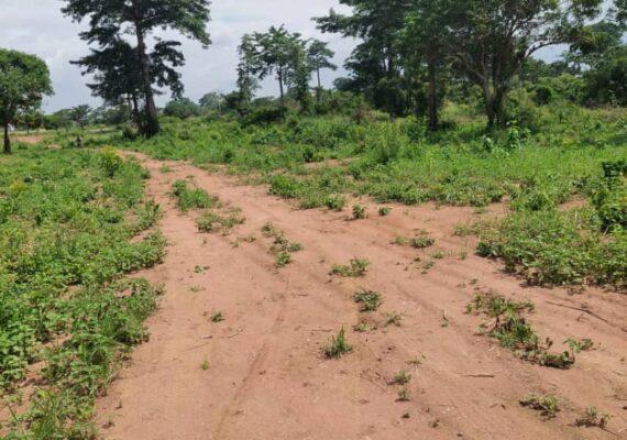 Conflit foncier à Abidjan-Cocody Angré Djibi Nord