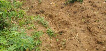 Terrain en vente à Bingerville Angorankoi